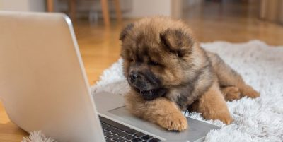curious puppy lying on the floor and looking at laptop